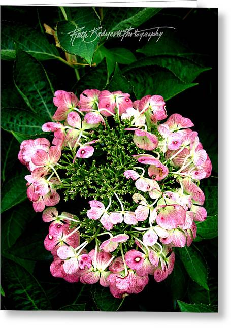 Ring Of Pink Greeting Card by Ruth Bodycott