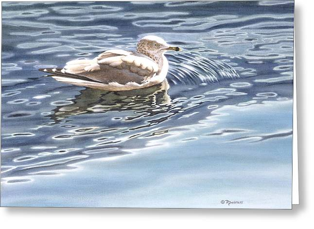 Ringed Bill Gull Greeting Card by Richard De Wolfe