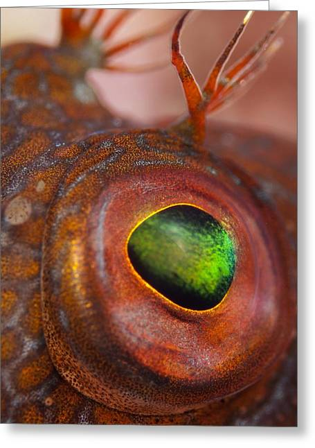 Ringneck Blenny Eye Greeting Card by Angel Fitor