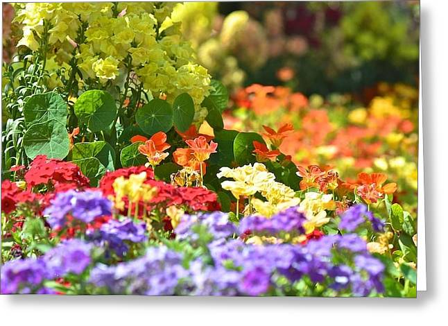 Riot Of Colours Greeting Card by Jyotsna Chandra
