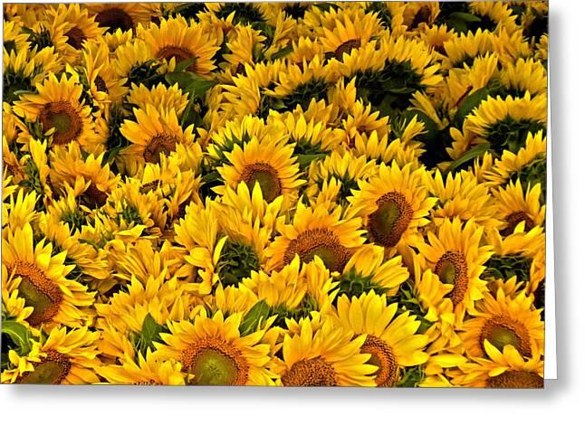 Greeting Card featuring the photograph Riotous Sunflowers by Nancy De Flon