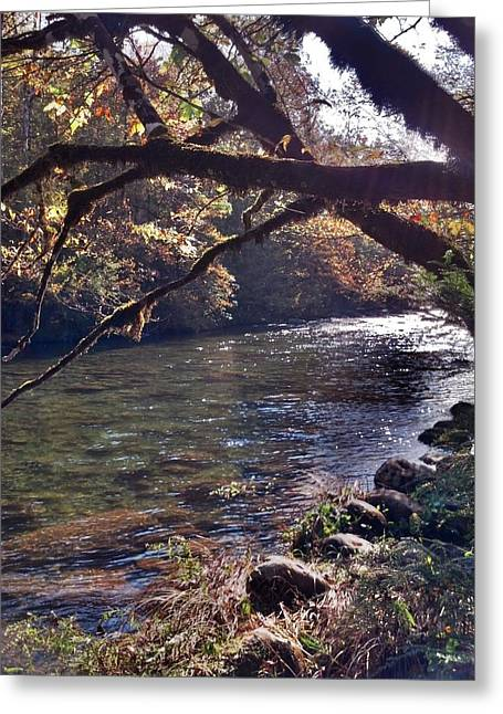 Greeting Card featuring the photograph Rivee View by Janice Spivey