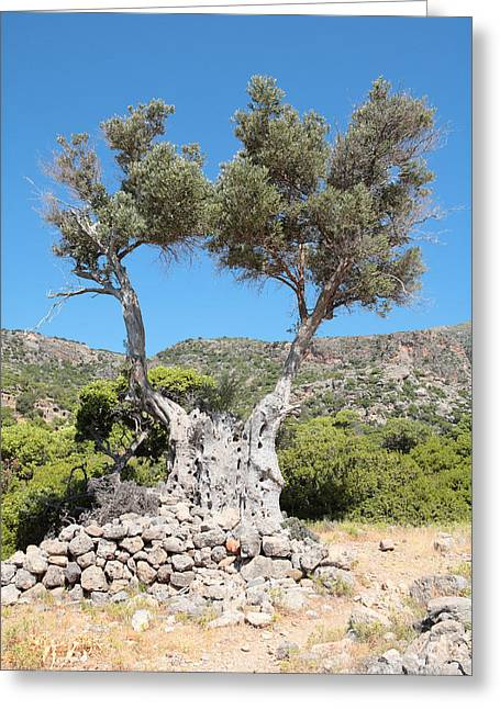 Riven Olive Greeting Card by Paul Cowan