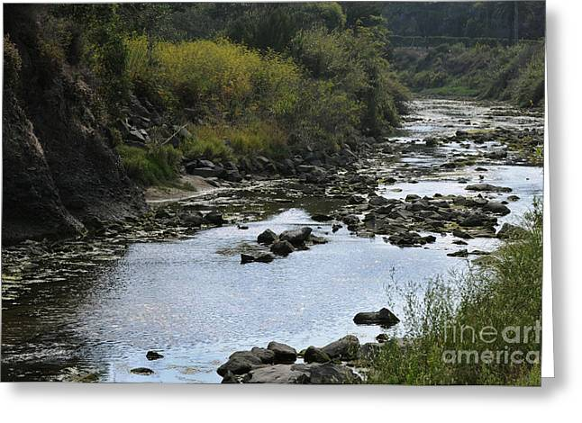 River At The Golf Course Laguna Greeting Card by Nelly Marziale