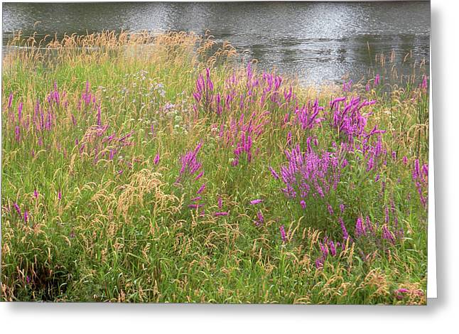 River Flowers Greeting Card by Fred Russell
