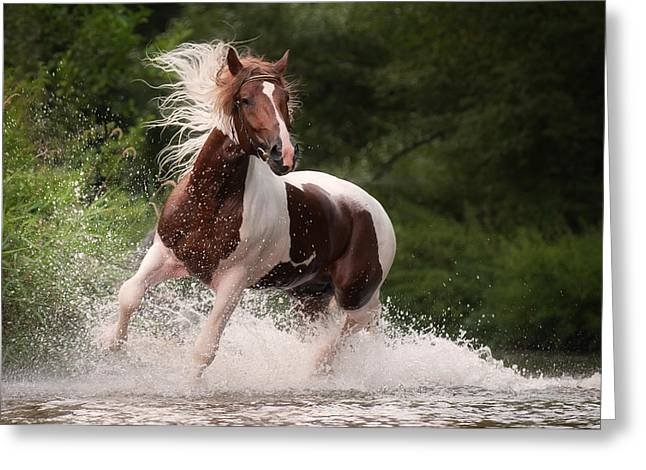 River Horse Greeting Card