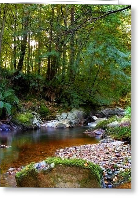 Greeting Card featuring the photograph River In Cawdor Big Wood by Joe Macrae
