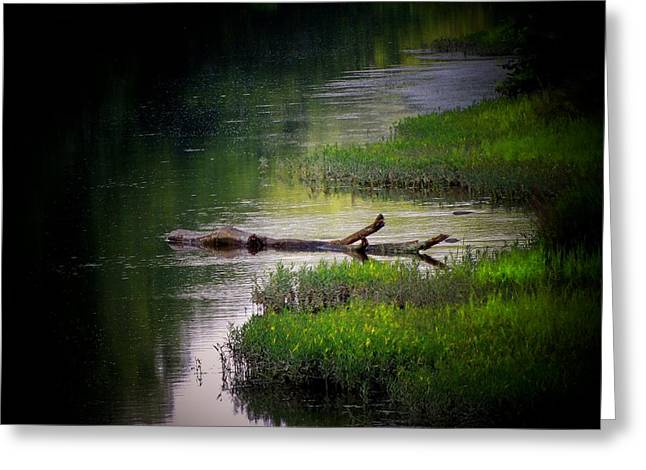 River Log Greeting Card by Michael L Kimble