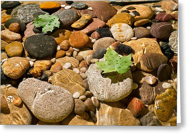 River Stones Greeting Card by Steve Gadomski