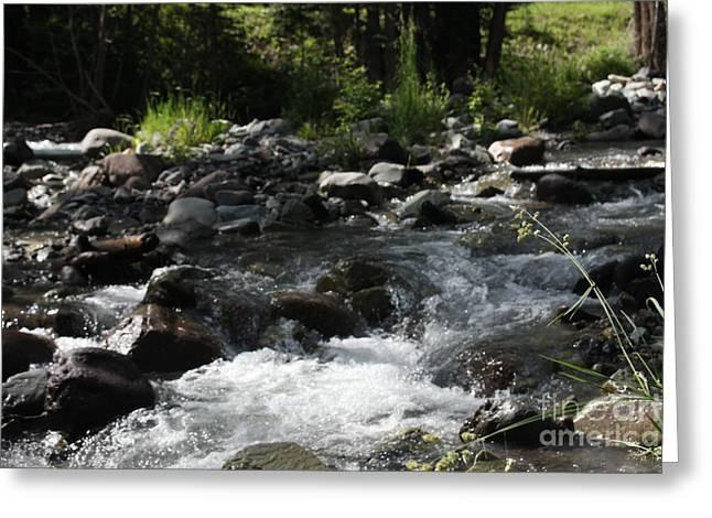 Riverrock Waterfall Greeting Card by Marta Alfred