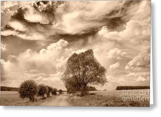 Road And Fields Greeting Card