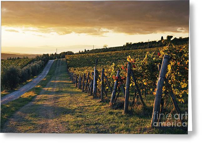 Road Through Vineyard Greeting Card by Jeremy Woodhouse