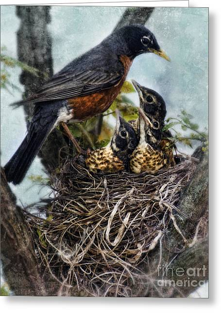 Robin And Babies In Nest Greeting Card by Jill Battaglia