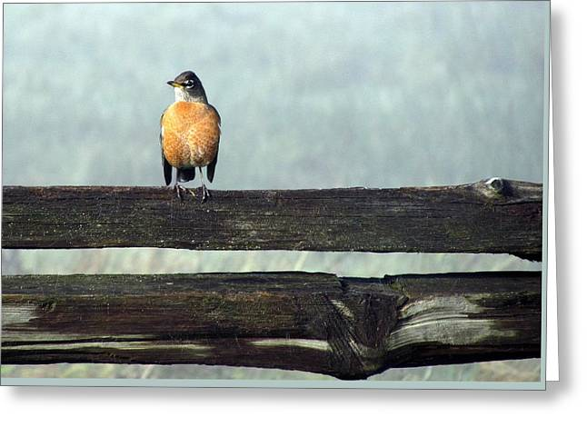 Greeting Card featuring the photograph Robin In The Mist. by I'ina Van Lawick