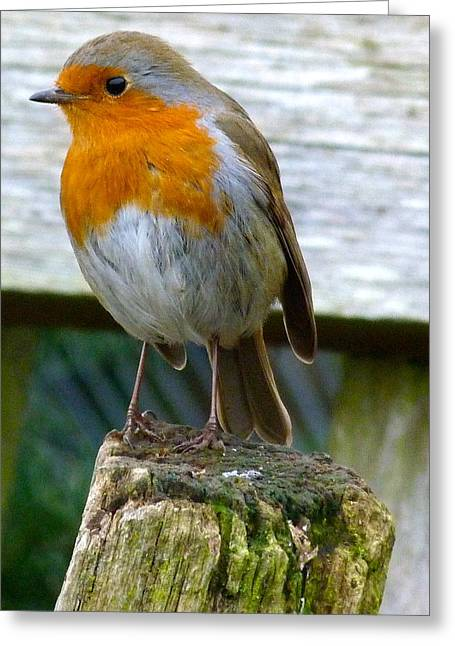 Robin Greeting Card by Karen Grist
