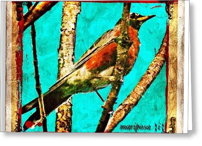 Robin Perch  Greeting Card
