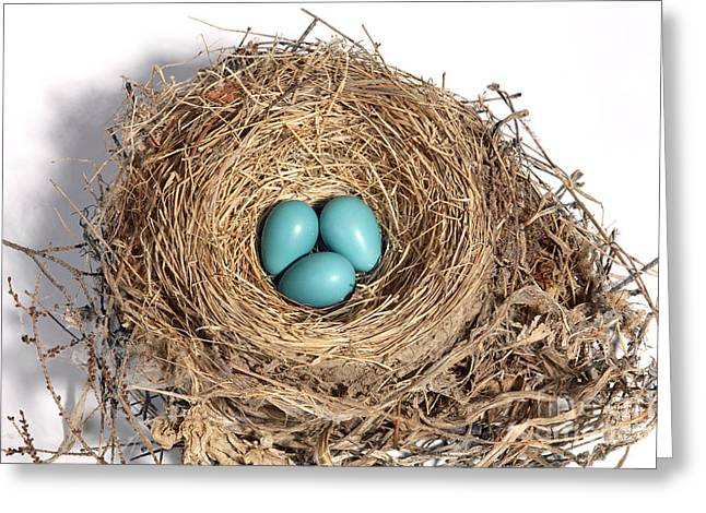 Robins Nest With Eggs Greeting Card by Ted Kinsman
