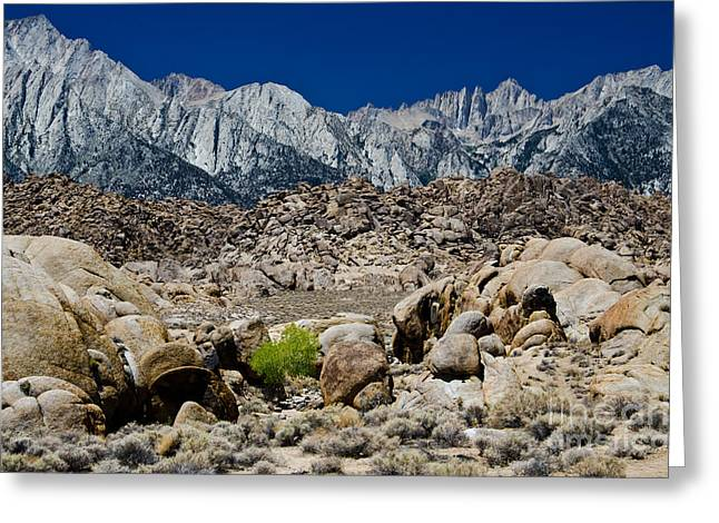 Rock Forest Greeting Card by Baywest Imaging