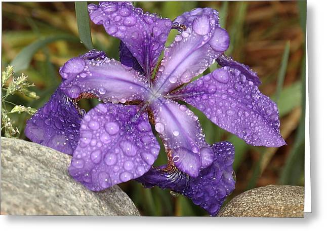 Greeting Card featuring the photograph Rock Iris by Coby Cooper