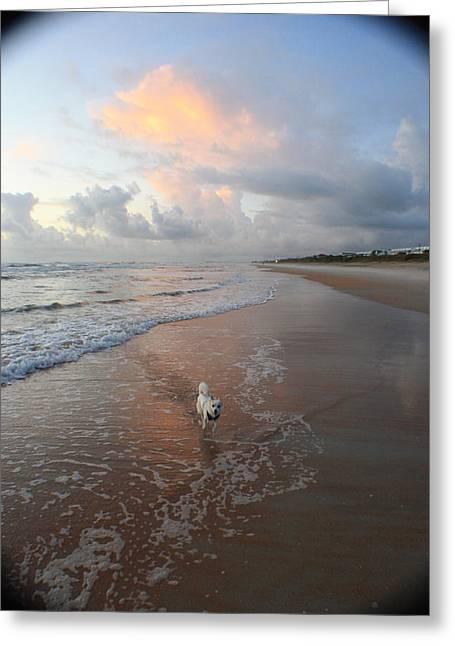 Rocko At Sunrise Greeting Card by Mandy Shupp