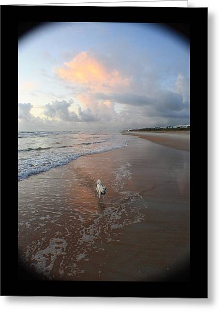 Rocko At Sunrise Greeting Card