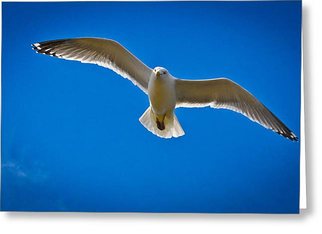 Rockport Gull Greeting Card by Erica McLellan