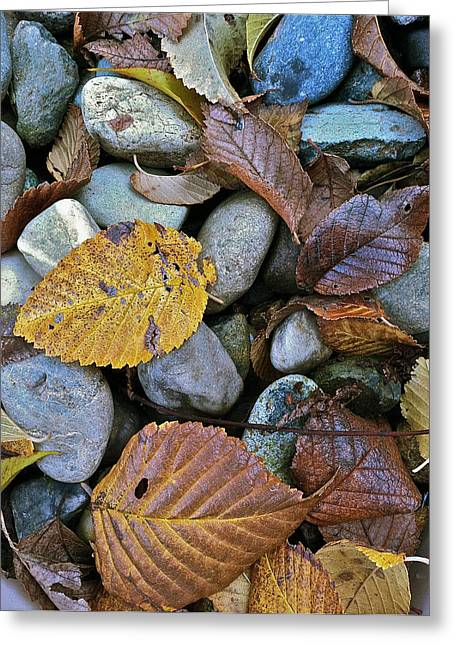 Rocks And Leaves Greeting Card by Bill Owen