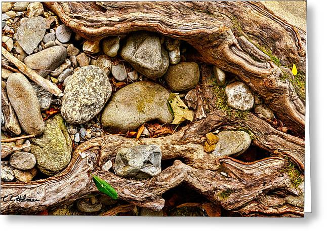Rocks And Roots Greeting Card by Christopher Holmes