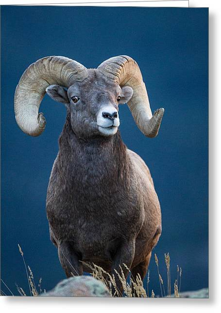 Rocky Mountain Big Horn Greeting Card