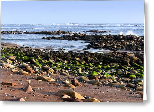 Rocky Shore Greeting Card by Svetlana Sewell