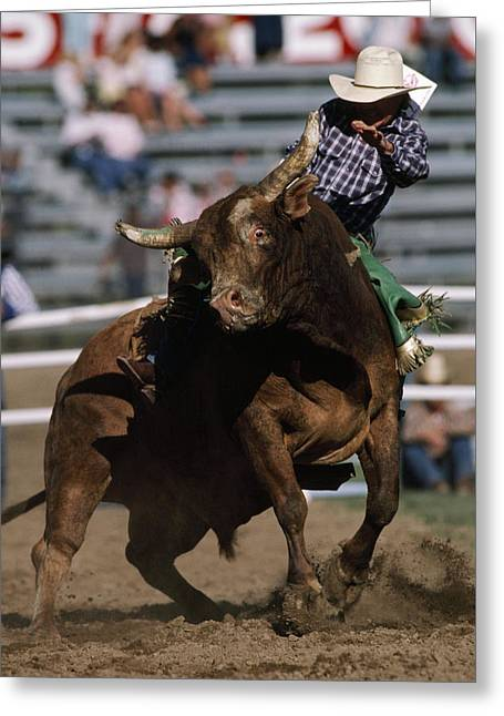 Rodeo Competitor In A Steer Riding Greeting Card