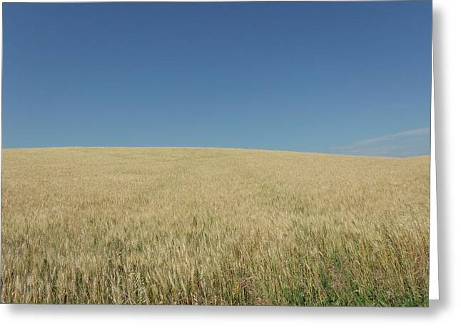 Rolling Wheat Fields Greeting Card by Brian  Maloney