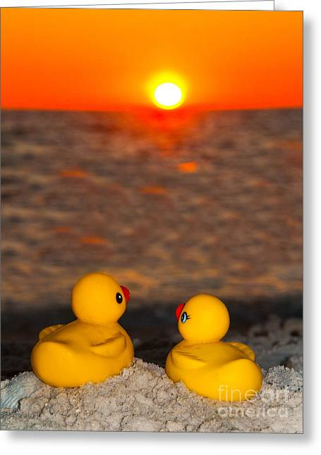 Romancing The Sun Greeting Card by John Hartung