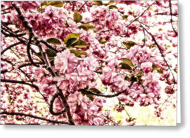 Romantic Cherry Blossoms Greeting Card