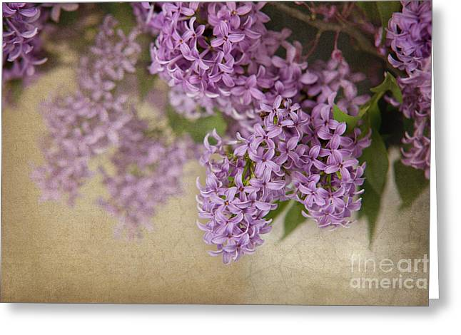 Romantic Lilac Greeting Card by Cheryl Davis