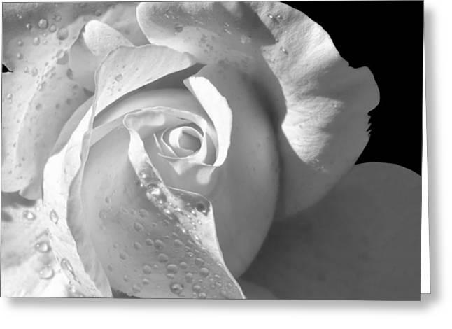 Romantic White Bridal Rose Greeting Card by Tracie Kaska