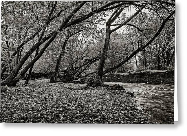 Rooted Within The Gravel Greeting Card by CJ Schmit