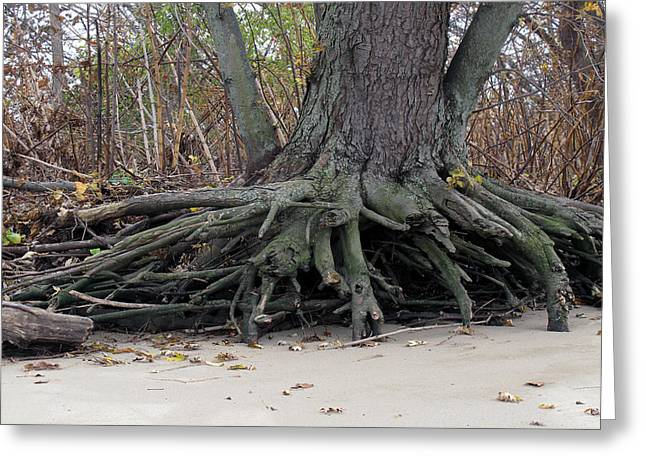 Greeting Card featuring the photograph Roots 001 by Dorin Adrian Berbier