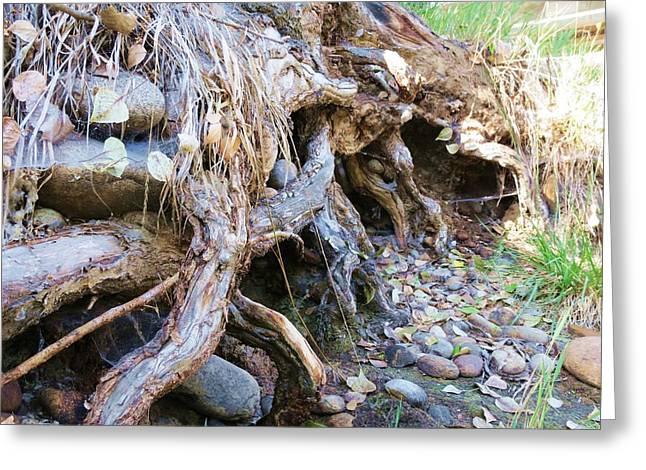 Roots And Stones Greeting Card by Don Barnes