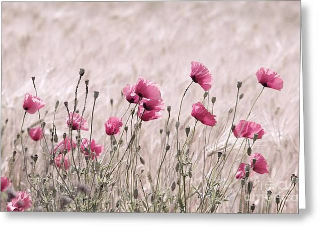 Pink Poppy Field  Greeting Card by Tanja Riedel
