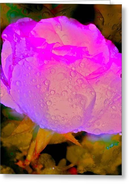 Rose 79 Greeting Card by Pamela Cooper