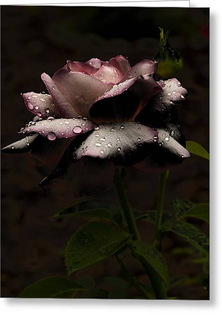 Rose After Dark Greeting Card by Barbara Middleton