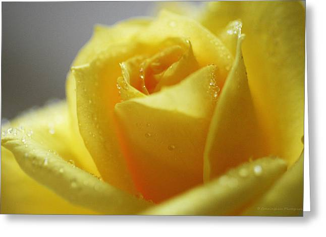 Rose After The Rain Greeting Card by Dorothy Cunningham
