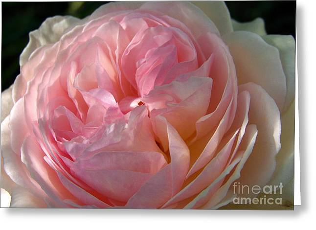 Greeting Card featuring the photograph Rose Anglaise by Sylvie Leandre