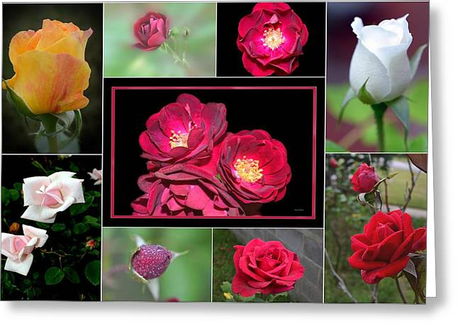 Greeting Card featuring the photograph Rose Collage 001 by George Bostian