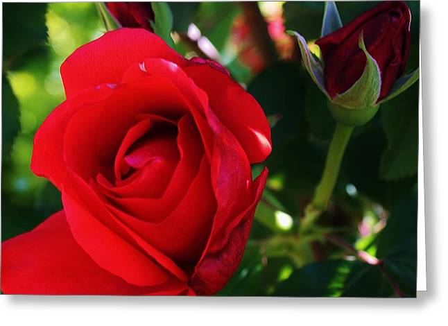 Rose Delight Greeting Card by Bruce Bley