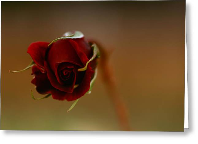 Rose Dream Greeting Card by Gabriel Calahorra