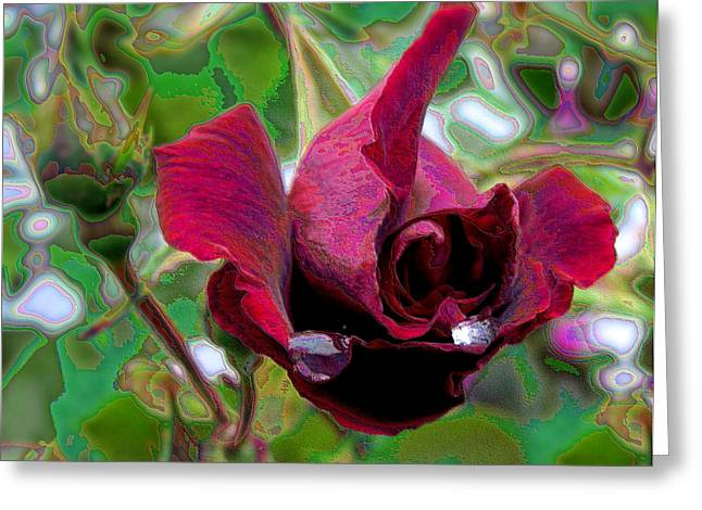 Rose Emerging Greeting Card