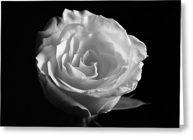 Rose Flower Greeting Card by Sumit Mehndiratta