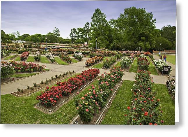 Rose Garden Park Greeting Card by M K  Miller